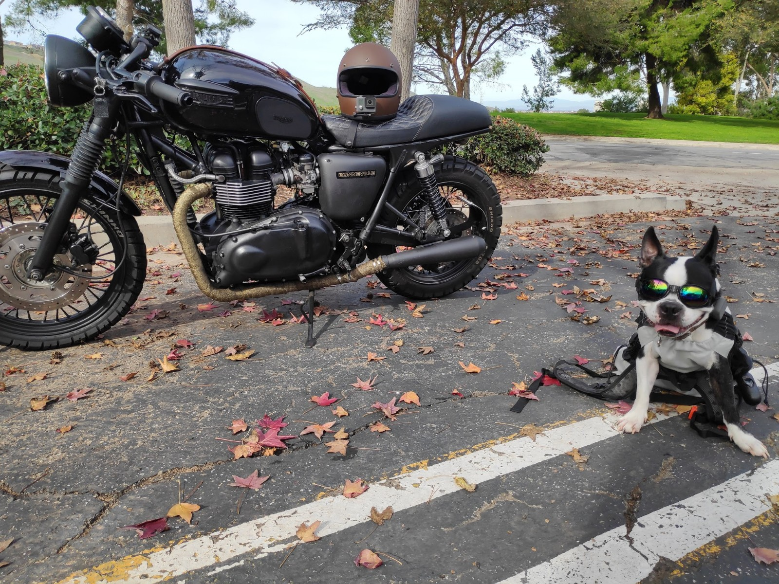 how-to-travel-with-a-dog